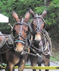 mules2_200